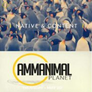 AMMA Native & content